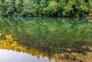 Üppiges Grün an den Ufern des Doubs